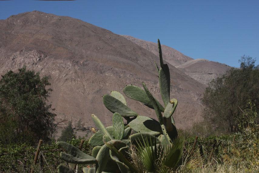 Algún lugar del Valle de Copiapó, Chile. Agosto 2016. Harold Berg